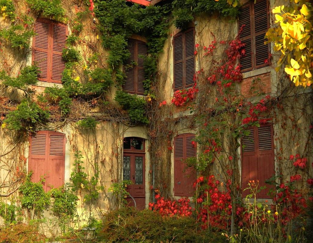 la maison du ginkgo a les yeux clos endormie derri flickr. Black Bedroom Furniture Sets. Home Design Ideas