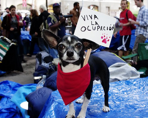 Occupy Wall Street Dogs Animals Chihuahua Pets 2011 | by david_shankbone