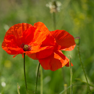 Weekend off to Flanders Field | by Peter Jaspers