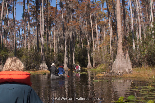 okefenokee swamp - val in real life