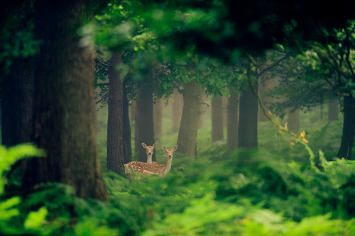 enchanted forest | by andrew evans.