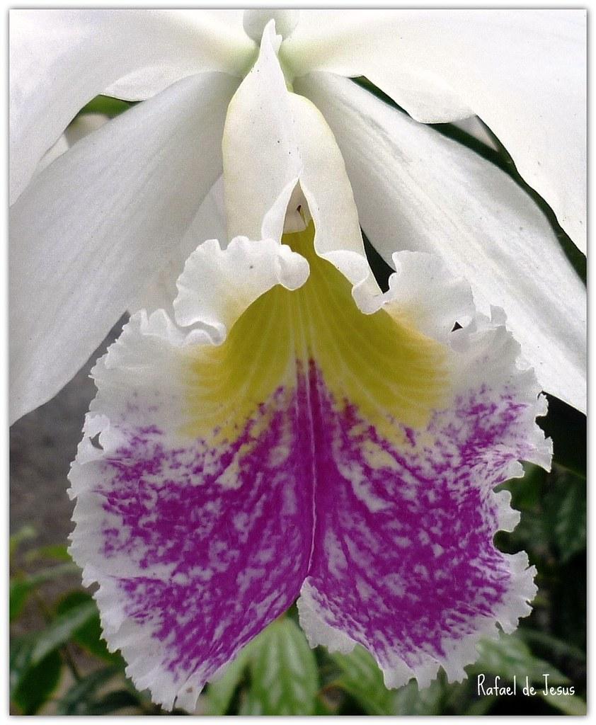 Mas cerca de ti orquidea orchid jardin botanico for Jardin lankester