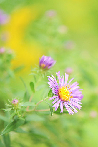 """Love is like wildflowers; It's often found in the most unlikely places."" ~ Unknown 