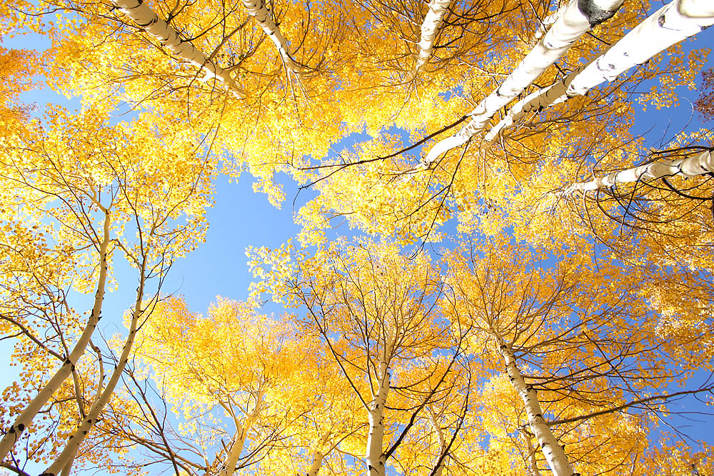 Flagstaff Fall Colors