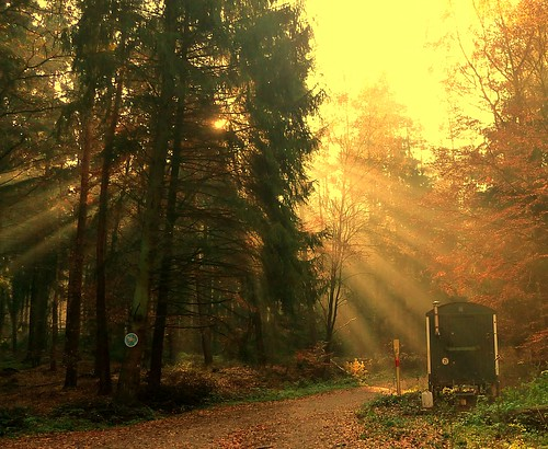 November sun rays, it's magic, YESSSSSS, Explored#40 | by Traudl2009*♥*(only catching up these days )