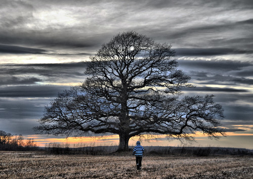Lonely tree and a son :) | by jimmy Johansen