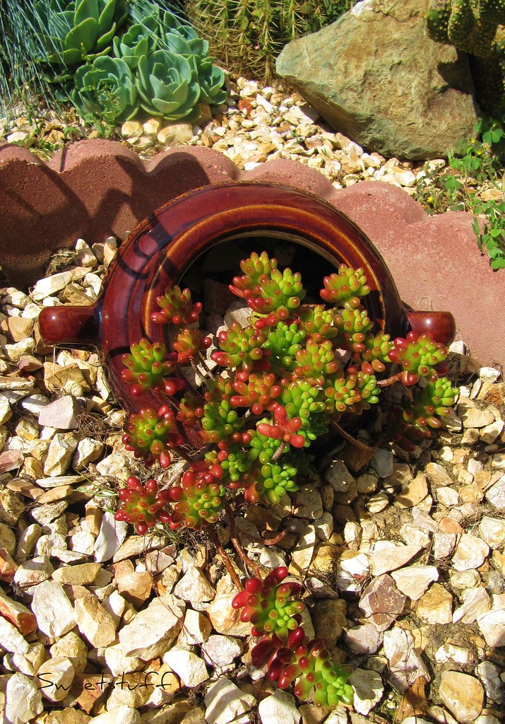 Spilling the beans i found this pot at at joanne 39 s a few for Pinterest gartenideen