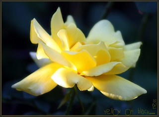 ~yellow on black~ | by itsjustme1340-Ress