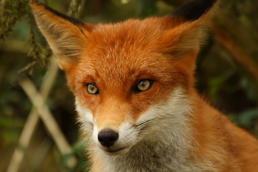 Beautiful Fox Cub One Of Frodo And Flo 39 S Cubs At The