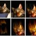 Firecat creation process