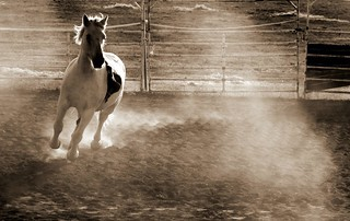 we'll ride - [explore 27/11/2011 #107] | by lucia bianchi