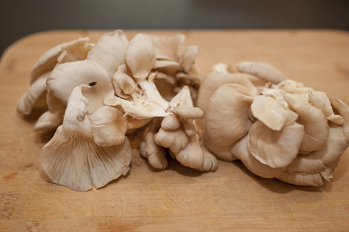 beautiful oyster mushrooms | by sassyradish