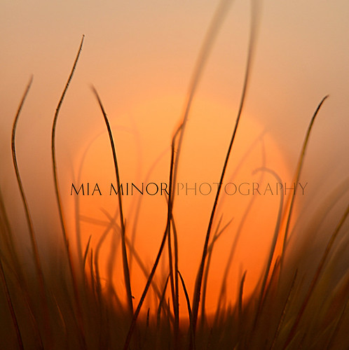 orange ball | by Mia Minor