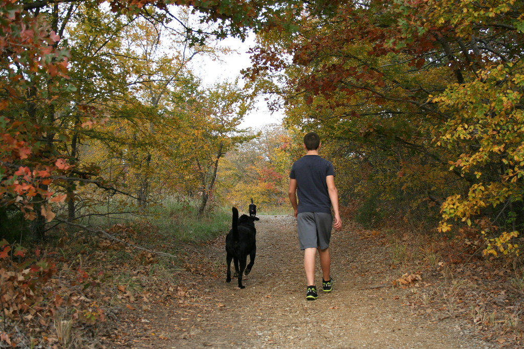 Walking The Woods With The Dogs Turkey Mt Hiking With