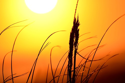 Seagrass and sunset | by Darren-