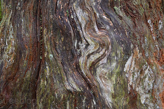 181111-colourful-swirls-stump | by treeblog