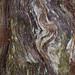 181111-colourful-swirls-stump