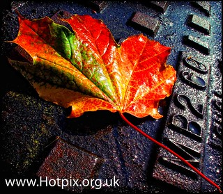iPod Shuffle2 - Sweet Leaf | by @HotpixUK -Add Me On Ipernity 500px
