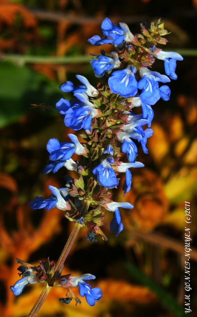 Fleurs et Fruits - Merveilles d\'Automne - Parc de Bagatell… | Flickr