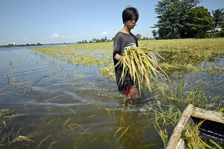 Walking through a flooded rice field | by World Bank Photo Collection
