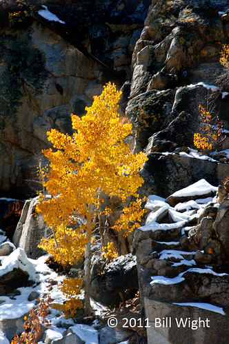 South Fork Fall Color | by Bill Wight CA
