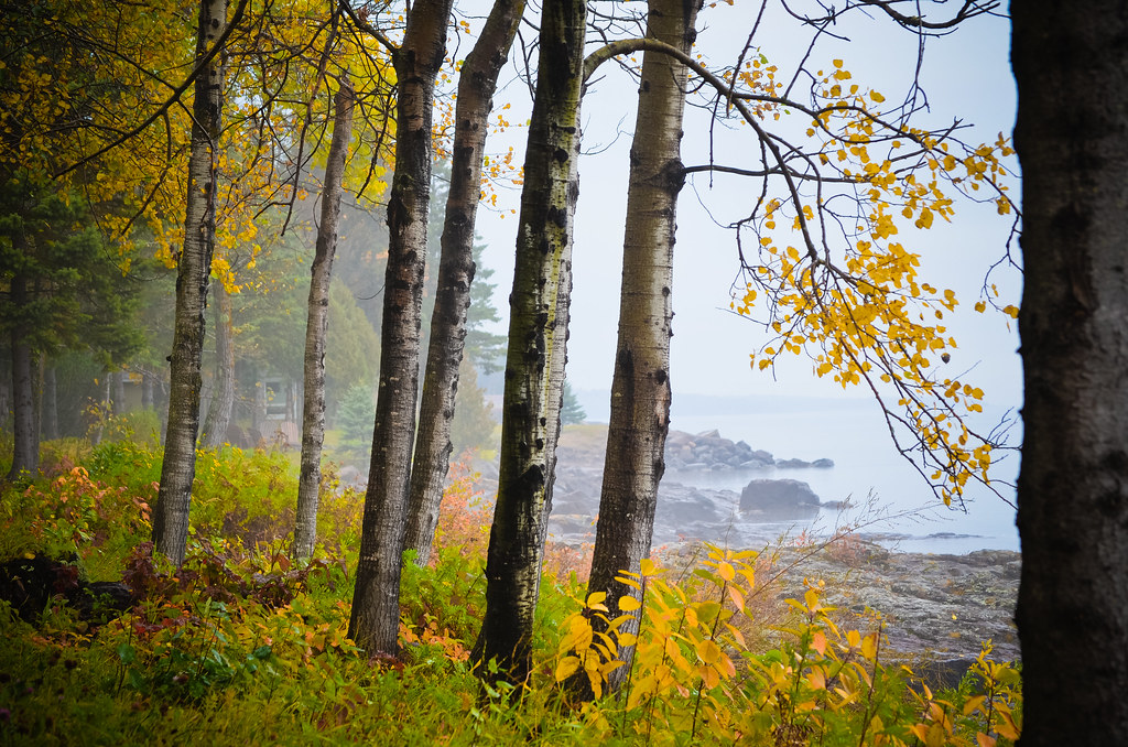 Foggy Morning Birch Larsmont Cottages Near Two Harbors