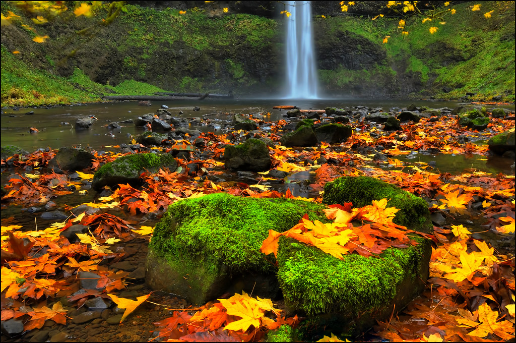 Silver Falls State Park South Falls With Fall Color Orego
