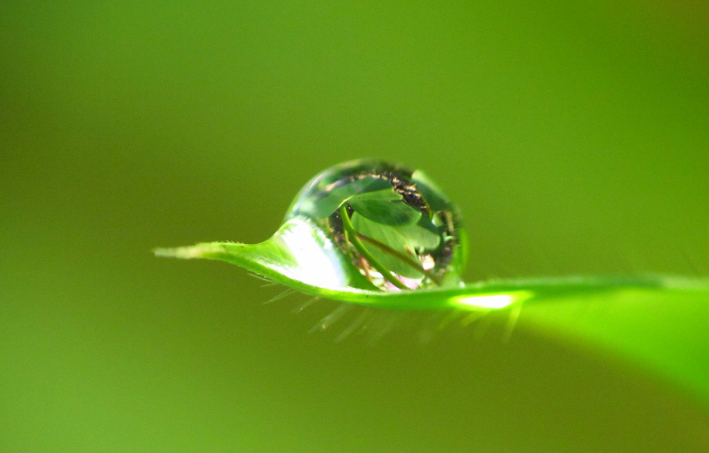 A drop of leaves on a ...