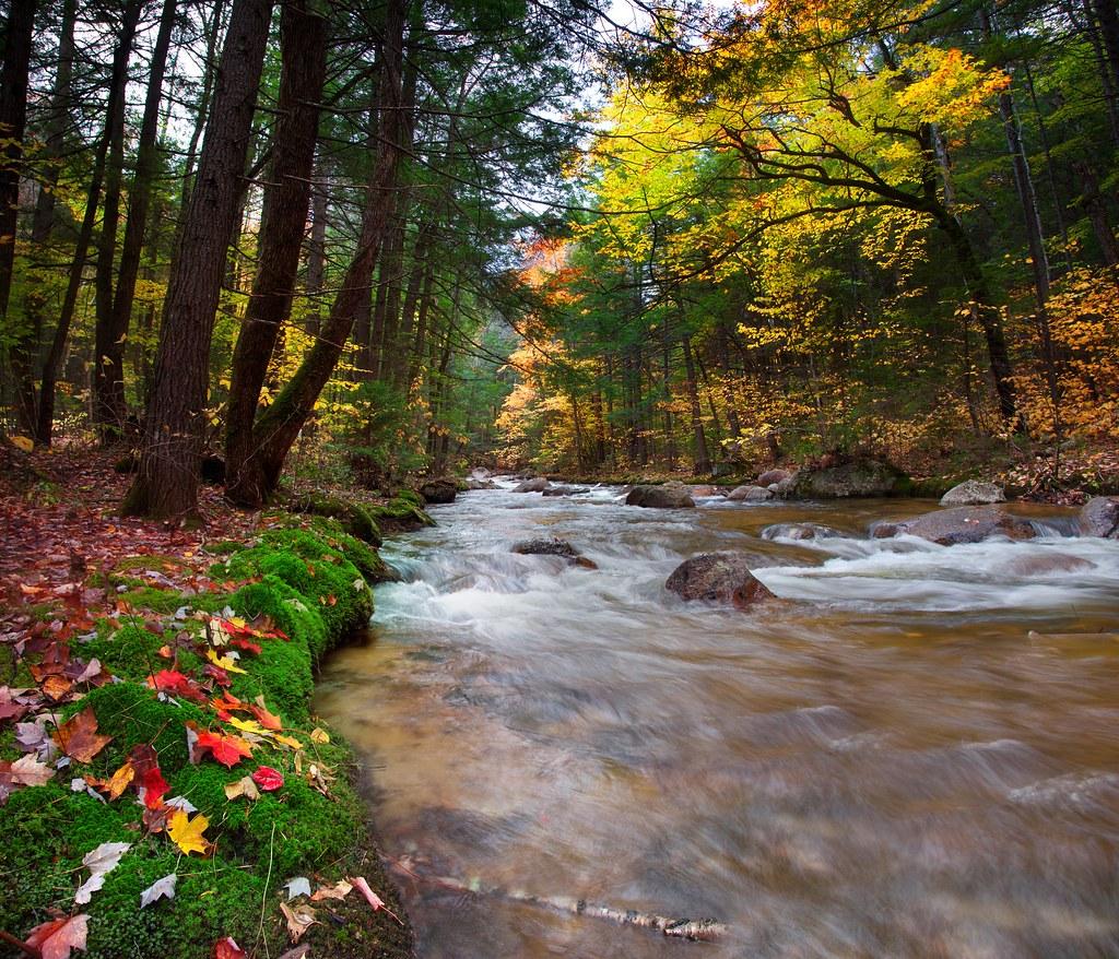 Stream Of Leaves United States New Hampshire White Mo