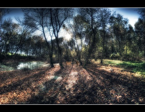 HDR | by BAD DOG DIABOLO