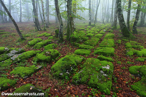 The Green Brick Road | by Joserra Irusta