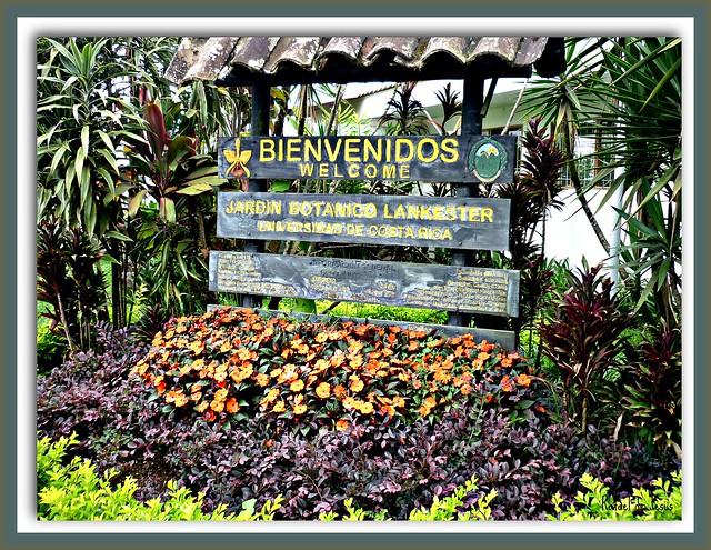 Jardin botanico lankester cartago costa rica pictures for Jardin lankester