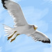 Seagull study 2