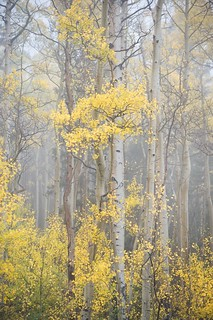 aspen mists II | by bytegirl24