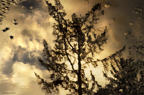 Reflection in a Mud Puddle | by elliemiller46