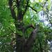290611-chestnut-0858
