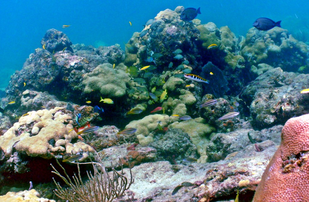 Coral Reef Scene Lauderdale By The Sea Florida A