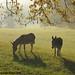 Autumn morning in Donkeyland 4