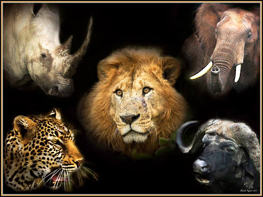 my big five 2011 we went to kenya on a big five safari and flickr. Black Bedroom Furniture Sets. Home Design Ideas