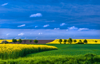 Spring Fields #2 | by Peter Femto