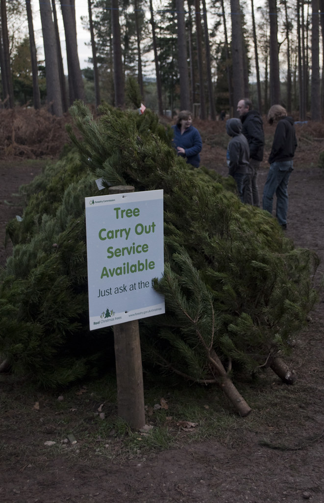 Cannock Chase Christmas Trees | Buying a Christmas tree at B… | Flickr
