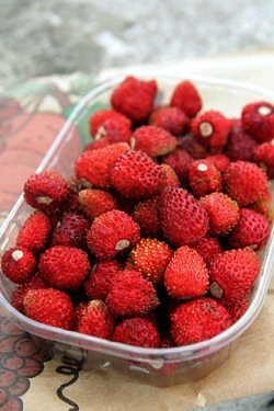 fraises des bois fraises des bois david lebovitz flickr. Black Bedroom Furniture Sets. Home Design Ideas