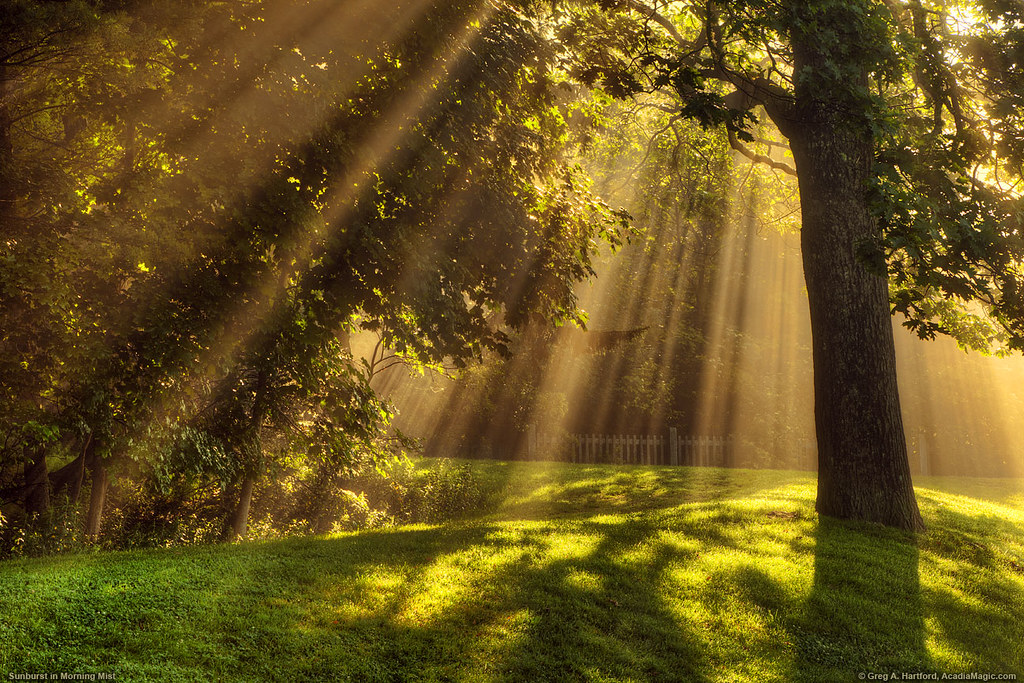 Light Rays In Morning Mist Light Rays Burst Through The