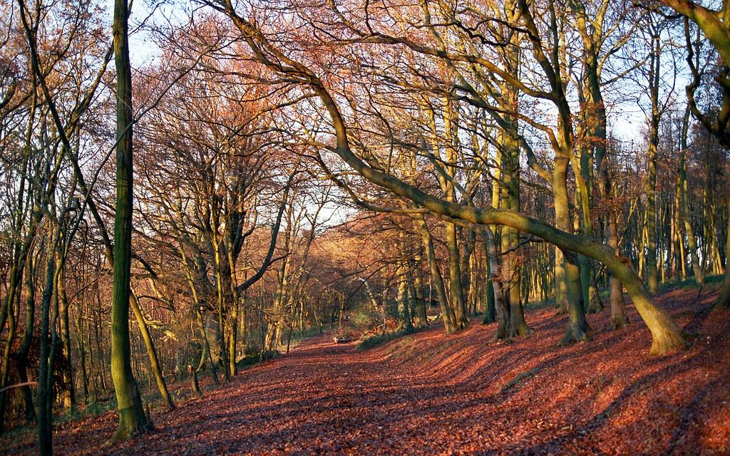 Colors Of Autumn 6 Of 18 Ashridge Park Hertfordshire
