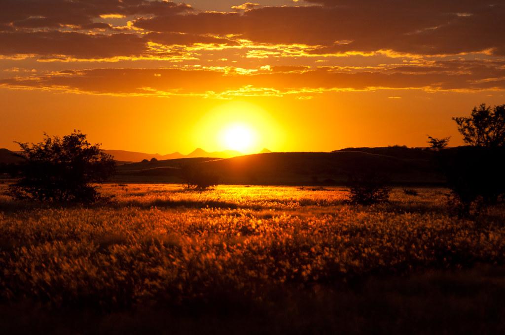 Savanah sunset | Coucher de soleil sur la savane | Franck
