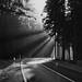 bright light in dark woods 1