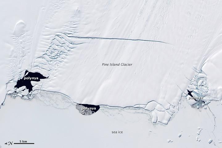 Image result for coastal polynya