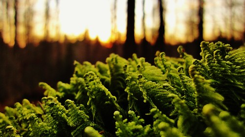 Moss in the evening | by EJLKSL