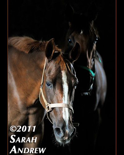 Bright Eyes | by Rock and Racehorses