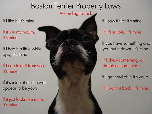 "Oct 20 2011 [Day 354] ""Boston Terrier Property Laws..."" 